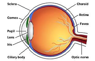 Eye Simulation Using 3d Animation