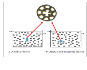 Mechanisms Of Nutrient Removal In Moving Bed Biofilm Reactors
