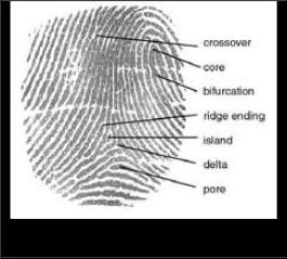 Noise Elimination and Performance Measure for fingerprint using ...